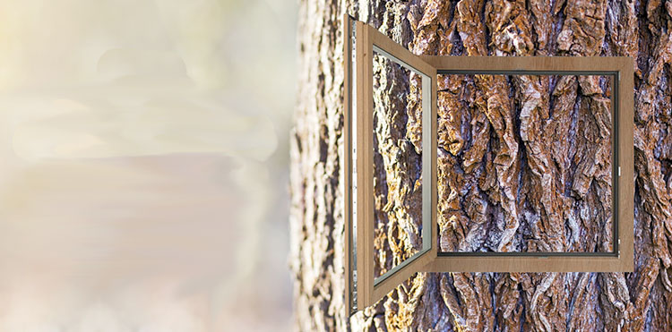 Texturas inspiradas en la naturaleza que transforman el tacto de las ventanas